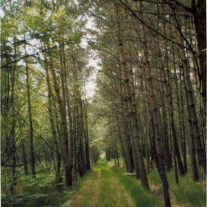 Allée dans les bois