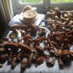 Cueillette champignons Sept 2018