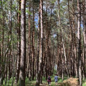 Promenade forêt 2020