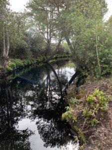 Un domaine de 35 hectares en forêt